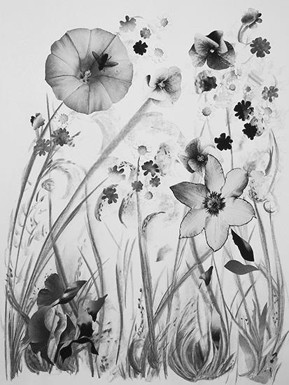 """""""Zwarte Bloemen"""""""